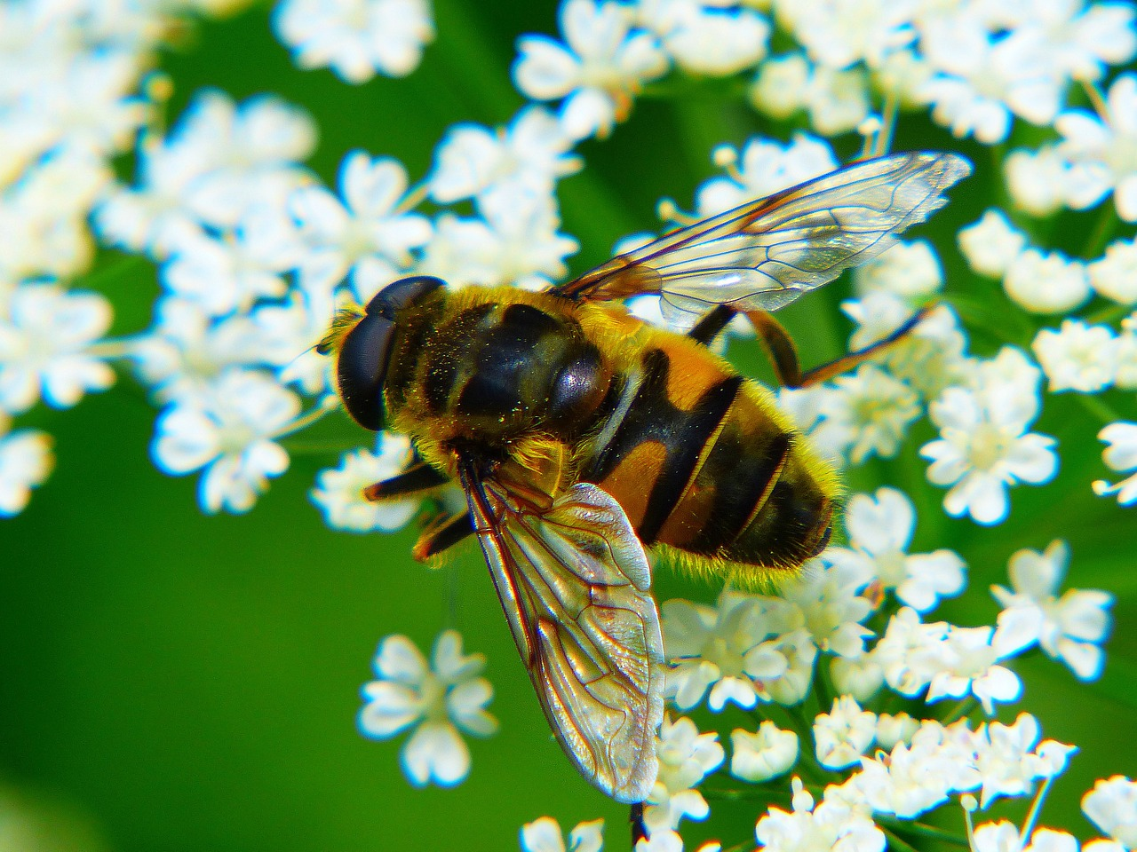 Tips For Planting A Bee Garden With Your Kids: Help These Insects As Your Children Learn